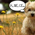 Klidný pes u veterináře? Naučte svého miláčka psí abecedu