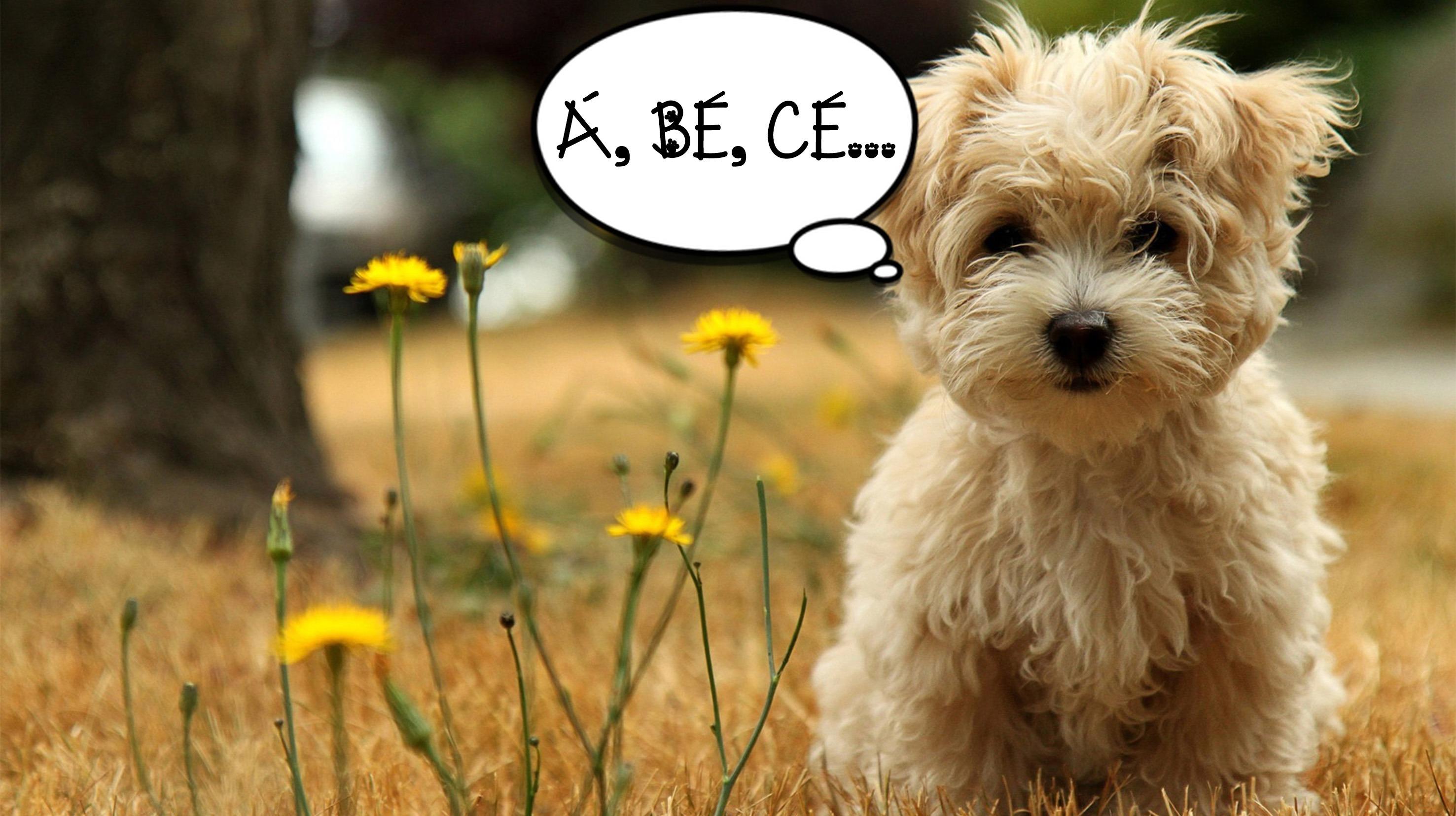 psí abeceda
