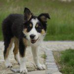 5 tipů, na co nezapomenout, když si přivezeme domů štěně