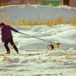 11 nejčastějších výmluv, proč pes neposlechl