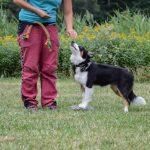 Jak zlepšit trénink vašeho psa? Změňte 3 věci a Váš pes začne poslouchat