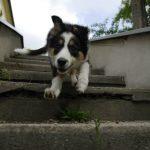Přivolávačské hry: lítám v tom taky! 2 přivolávačské hry pro Vás a Vašeho psa