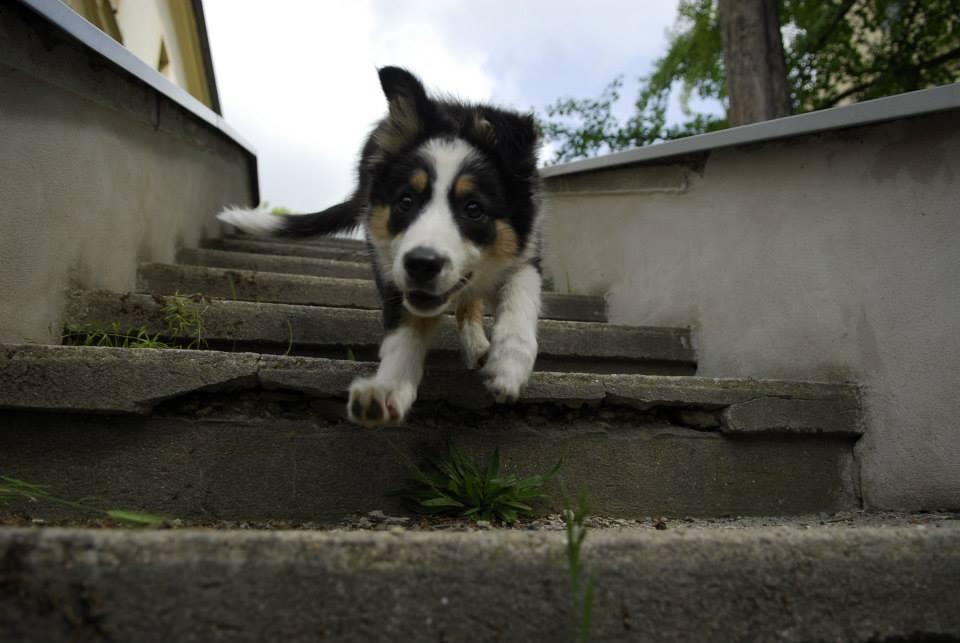 Přivolávačské hry: lítám vtom taky! 2 přivolávačské hry pro Vás a Vašeho psa
