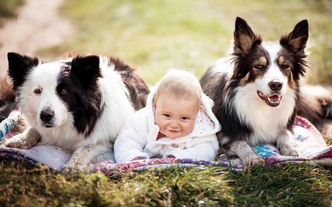Děti kpsovi nebo psa kdětem?