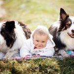 Děti k psovi nebo psa k dětem?