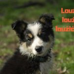ŠTĚNĚCÍ SPECIÁL: Jak odnaučit štěně čůrat doma