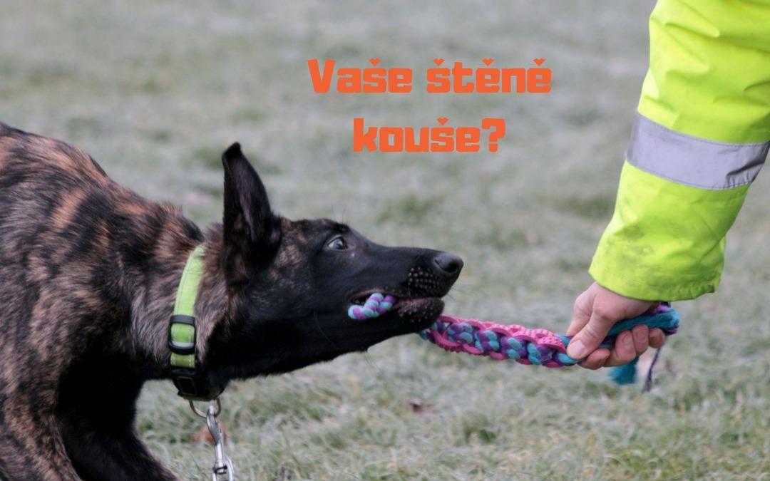 ŠTĚNĚCÍ SPECIÁL: Moje štěně kouše! Jak ho to odnaučit?