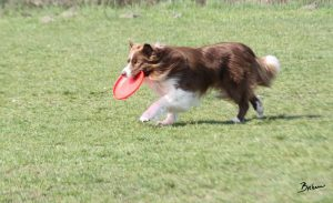 Pes s frisbee