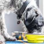 Víte, co rozhoduje o krmení vašeho psa? Jak, kdy a co? To je management krmení.